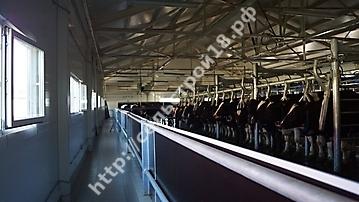 Строительство молочного комплекса на 800 голов_6