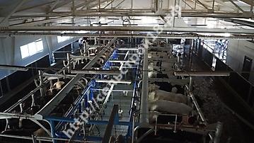 Строительство молочного комплекса на 800 голов_7