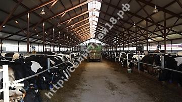 Строительство молочного комплекса на 800 голов_8