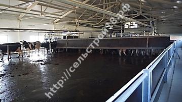 Строительство молочного комплекса на 800 голов_9