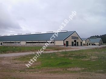 Кировская область, строительство молочного комплекса на 960 голов