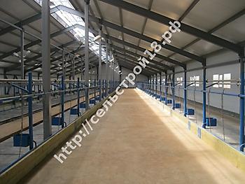 Строительство молочно товарной фермы КРС на 400 голов_8